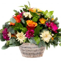 A bright basket of flowers. A selection of bright seasonal floral blooms such as roses and gerberas, suitable for all occasions birthday condolence baby flowers floral online florist deliver